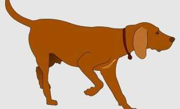 नांद में कुत्ता - शिक्षाप्रद कथा