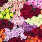 ग़ुलाब के रंगो के पीछे के अर्थ