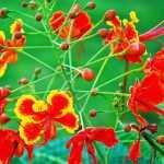 4 मॉनसूनी फूलो वाले पौधे भारतीय परिवेश के अनुसार